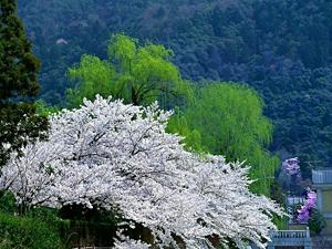 16aspring_of_mazandaran_province_2