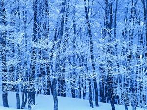 32in_winter